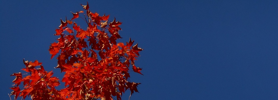 orange-blue_938x337