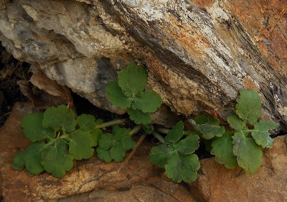green-peek_934x657