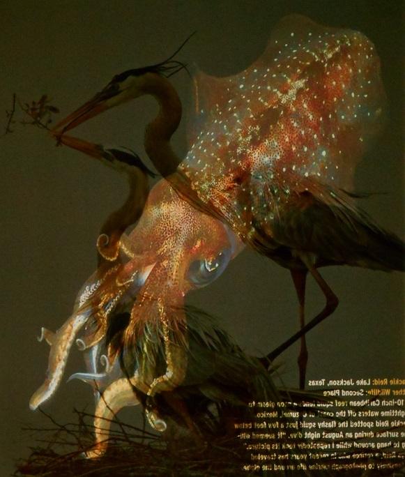 HeronSquid_581x684