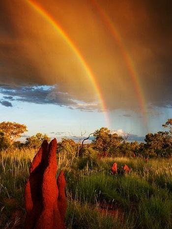 australian-rainbow_350x466