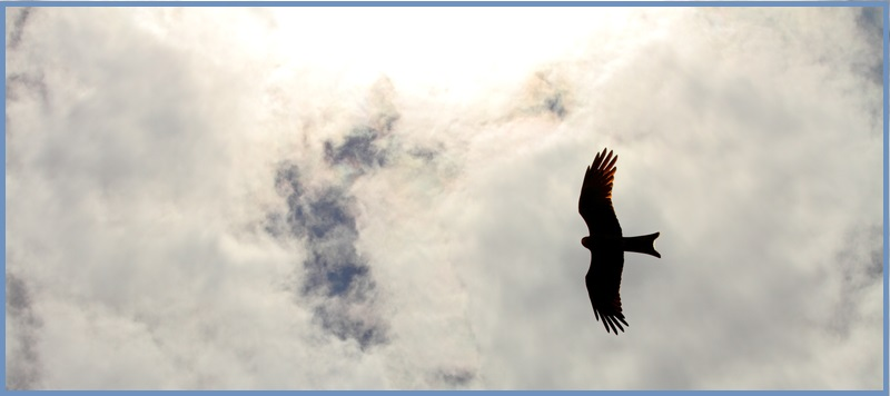 hawk-shadow_800x356