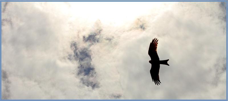 hawk-shadow_800x356