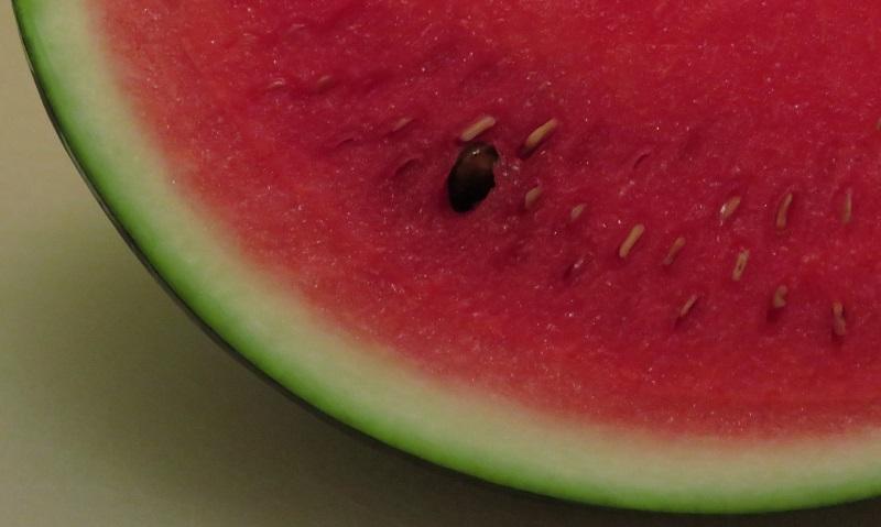big-seed-slice_800x479