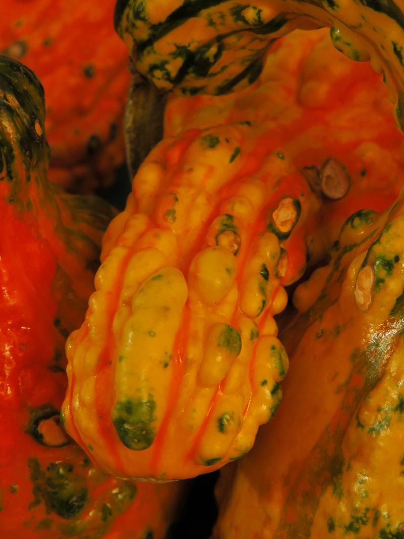 penis-gourd_800x1067