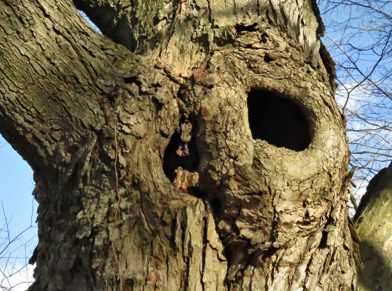 maple-hole-crop_800x595