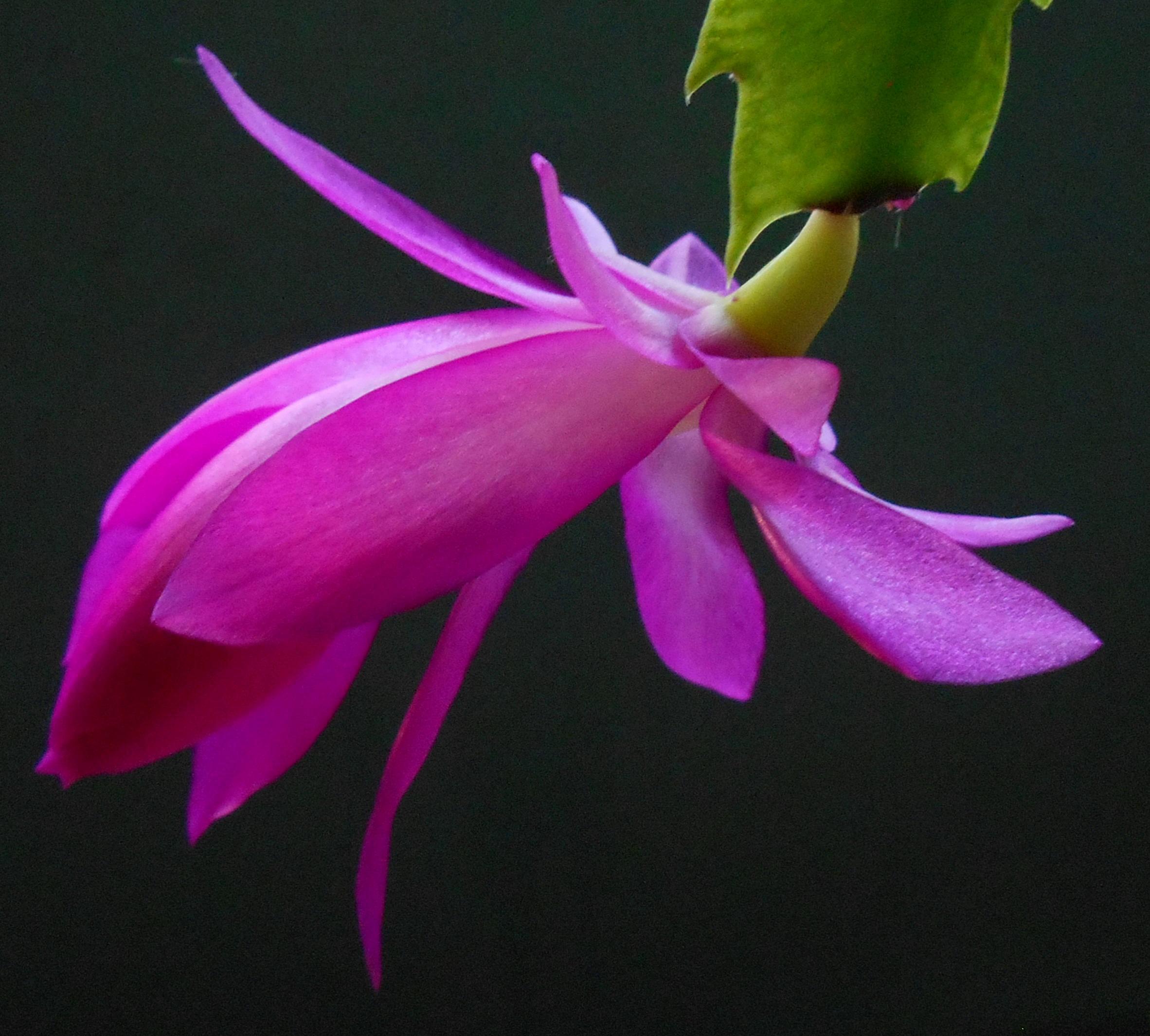 pink-blossom_833x751
