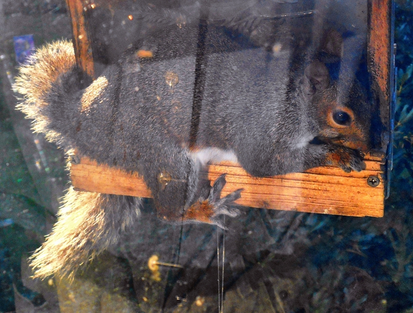 squirrel_840x636
