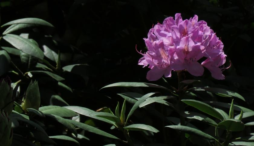 lavender-memorial_840x483