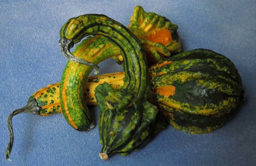 gourds-3#_840x547