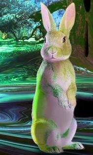 Greenish-Bunny