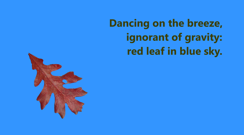 red-leaf_blue-2_haiku-144_840x465