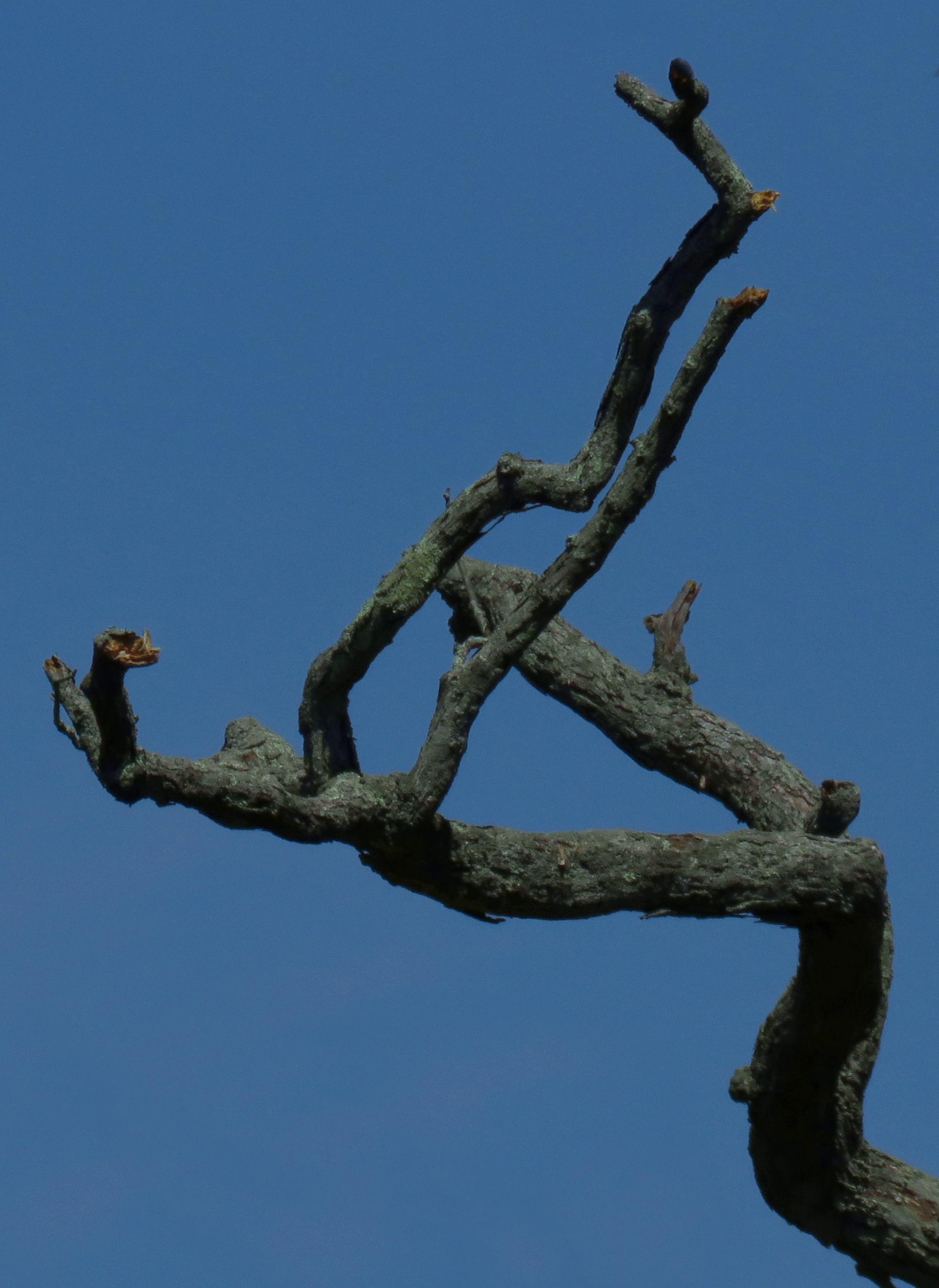 dark-branches_rot+8.1_crop_sat+23_tweak_sat-blu+13_840x1152
