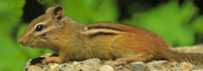 flying-squirrel_crop_clone_840x294